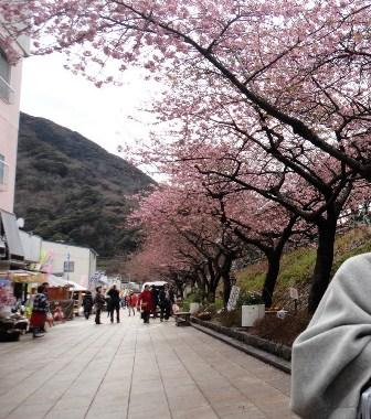 TH120229 河津桜の下で