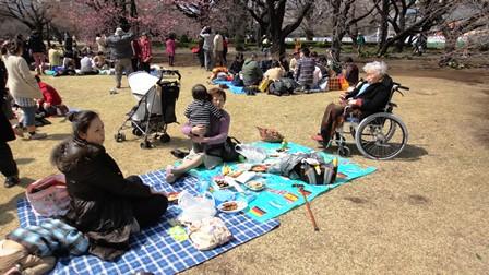 120401 新宿御苑でピクニック 良いお天気でした