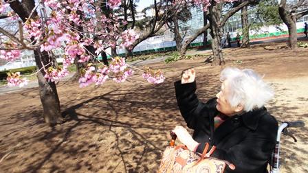 120401 桜に何度も「きれいね」と言われて