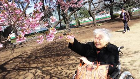 120401 咲いた桜に思わず手が伸びて