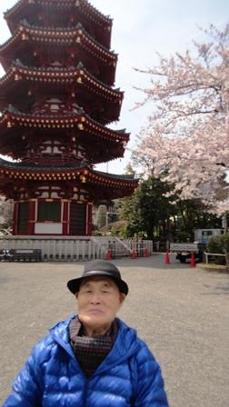 TH 120406 川崎大師 五重塔前の桜も見頃です
