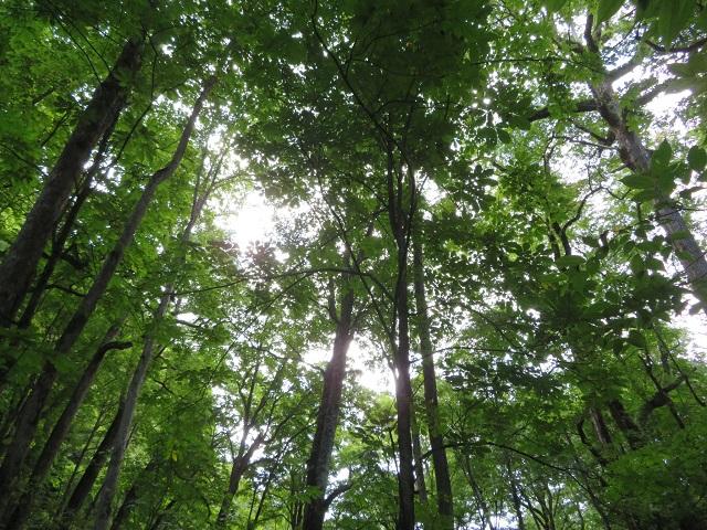 奥入瀬の木々