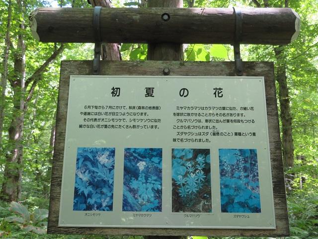 初夏の花を説明した看板